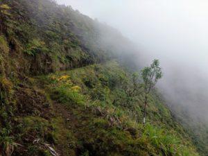 white road hike, waipio valley, kohala forest reserve, kamuela, the big island