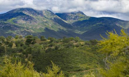 Cuyamaca Peak – Cuyamaca Rancho State Park