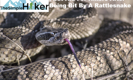 What Hikers Need To Know About Rattlesnakes Part Two: First Aid in The Field and What To Expect In The Emergency Room