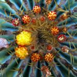 Balboa Park, Succulents, Spring Wildflowers, Cactus, Southern California, Photography