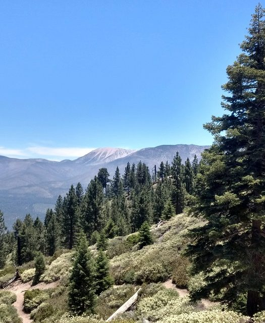 Pine Knot Trail to Grand View Point