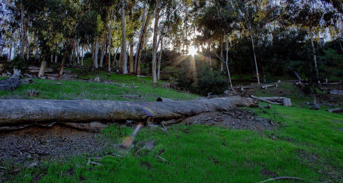 Hosp Grove Park Hiking Trails
