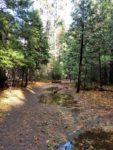 Mirror Lake, Hiking Trail, Yosemite National Park, Trail Guides