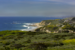 black mustard, Crystal Cove State Park Hiking Trail Guide