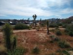 The parking lot to Barker Dam trail in Joshua Tree National Park.