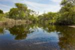Oak Canyon, Hiking Trail, Mission Trails Regional Park