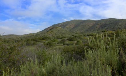 A Complete Guide To The Mission Trails Regional Park Five Peak Challenge