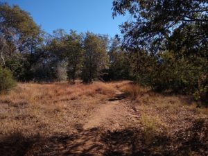 Foster Point Hiking Trail Guide