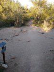 Signal Hill Hiking Trail Guide, Saguaro National Park