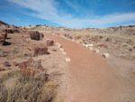 Giant Logs Loop Trail Hiking Guide