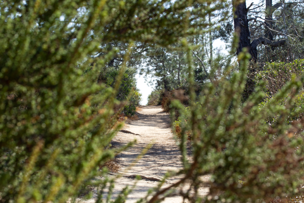 Red Ridge Trail hiking guide, Torrey Pines State Natural Reserve
