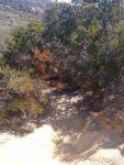 Torrey Pines State Natural ReserveMargaret Fleming Trail Hiking Guide