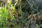 Santa Margarita River Trail Preserve Hiking Trail Guide, Fallbrook, California, San Diego