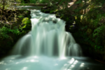 Whitehorse Falls Hiking Trail Guide, Clearwater, Oregon