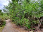 Lake Ramona via Lake Poway Hiking Trail Guide, Blue Sky Ecological Reserve