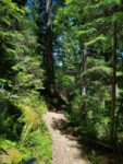 Watson Falls Hiking Trail Guide, Oregon, Watson Creek, North Umpqua River