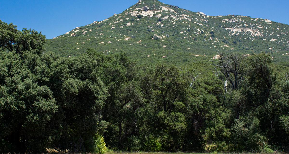 Oakzanita Peak – Cuyamaca Rancho State Park