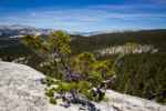 Lembert Dome hiking trail guide, yosemite national park, Tuolumne Meadows