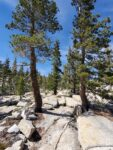 May Lake Hiking Trail Guide, Yosemite National Park