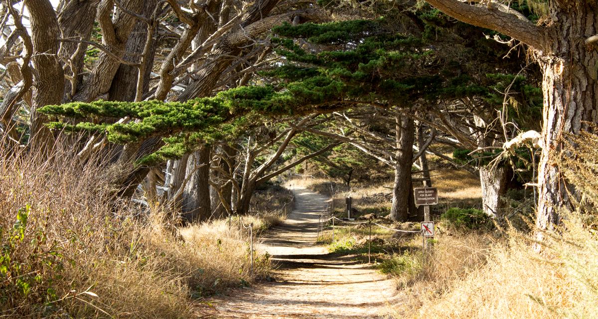 Point Lobos South Shore Trail