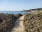 Point Lobos South Shore Trail Hiking Guide