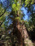Big Sur Nature Trail Hiking Guide